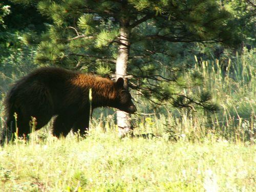 Bear, cabin, July 08 008