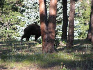 8-11-09 Bear, 073