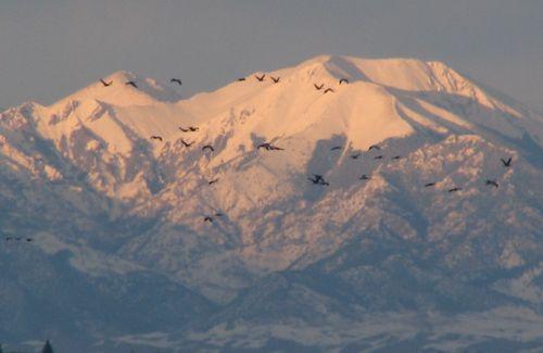 Monte Vista, March 2010 016