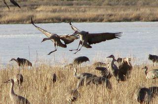 5 cropped Monte Vista, March 2010 006