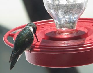 5-13-10 hummer cropped