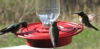 5-25-10 hummer 3