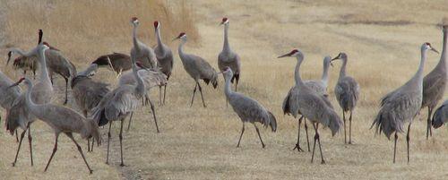 Cranes cropped
