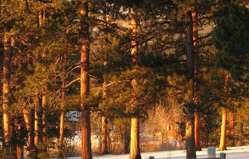 Morning sunrise 1-1-10 008