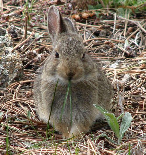 Rabbit cropped 5-25-11_7922