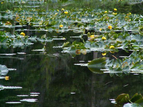 17 Cub Lake Trail, June 07 026