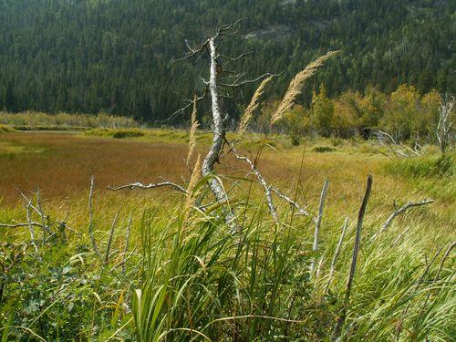 Cub Lake Sept. 06 014