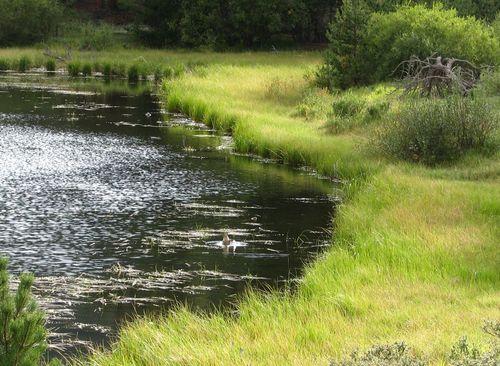 Lily Lake Sept. 2012 037