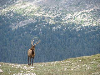 Trail Ridge, RMNP, Aug. 09 057
