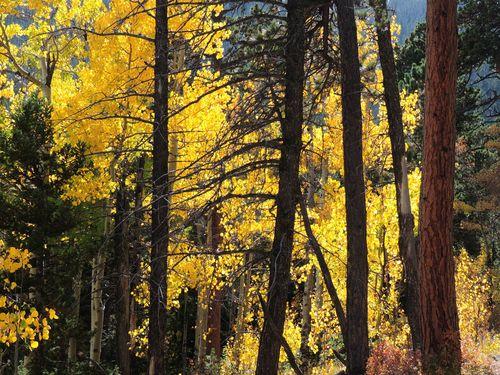 Wild Basin, Sept. 2015 056