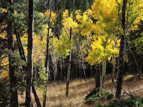 Wild Basin, Sept. 2015 059