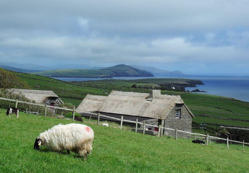 162 Dingle Peninsula, Ireland, May 2015 224