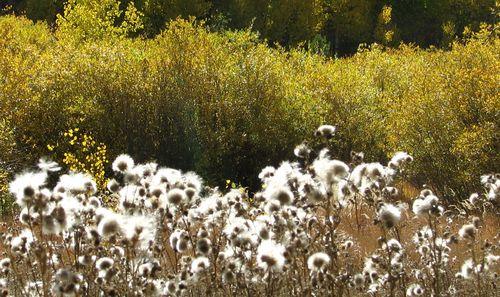9-27-11 seeds 019
