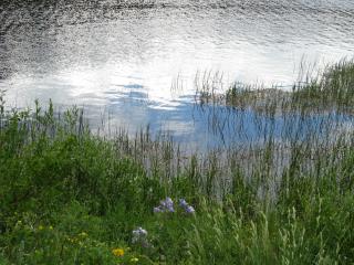 7-1-0 9 Lily Lake  017