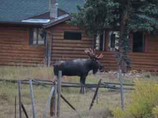 9-27-17 moose DSCN8142