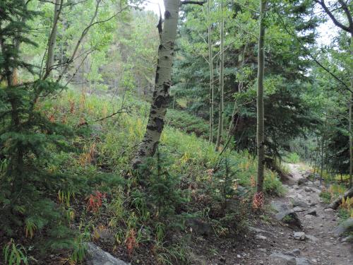 St. vrain mt. trail DSCN0318 (2)