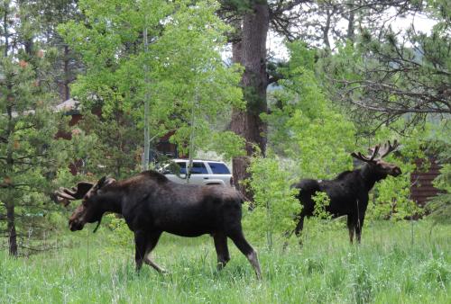 6-27-19 moose DSCN5085