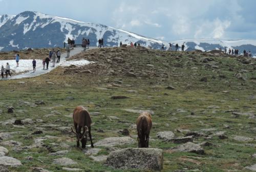 14 Trail Ridge  RMNP  7-1-19 DSCN5104